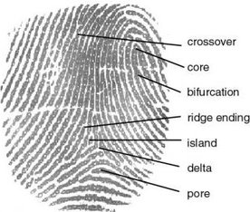 Fingerprint Principles - EsoSoft